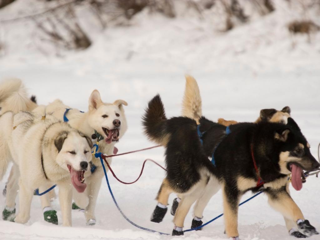 Une randonnée de 2 heures en traîneau à chiens