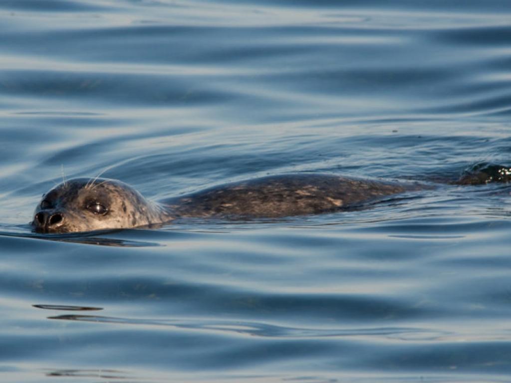 Observation de plus de 200 phoques au parc du Bic