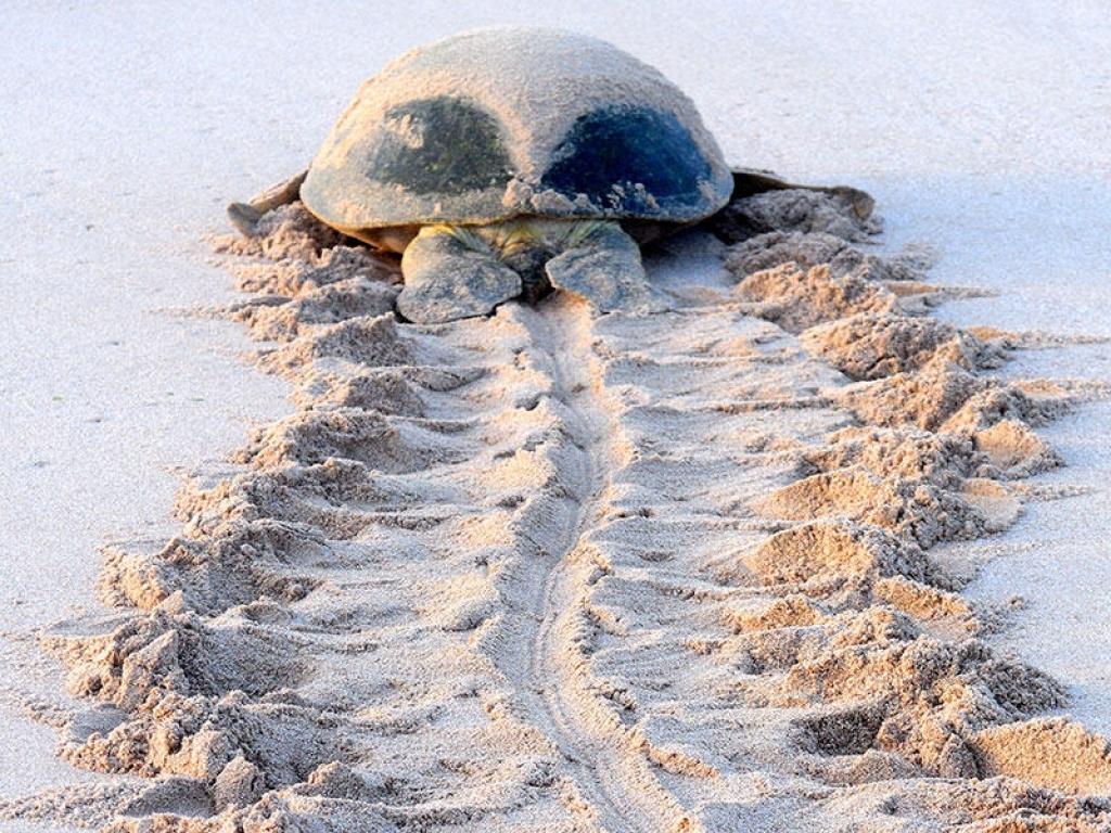 Sur la côte des tortues