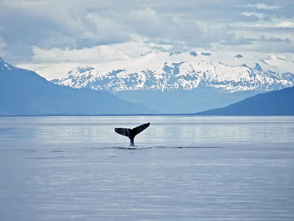 Tadoussac, le chant des baleines