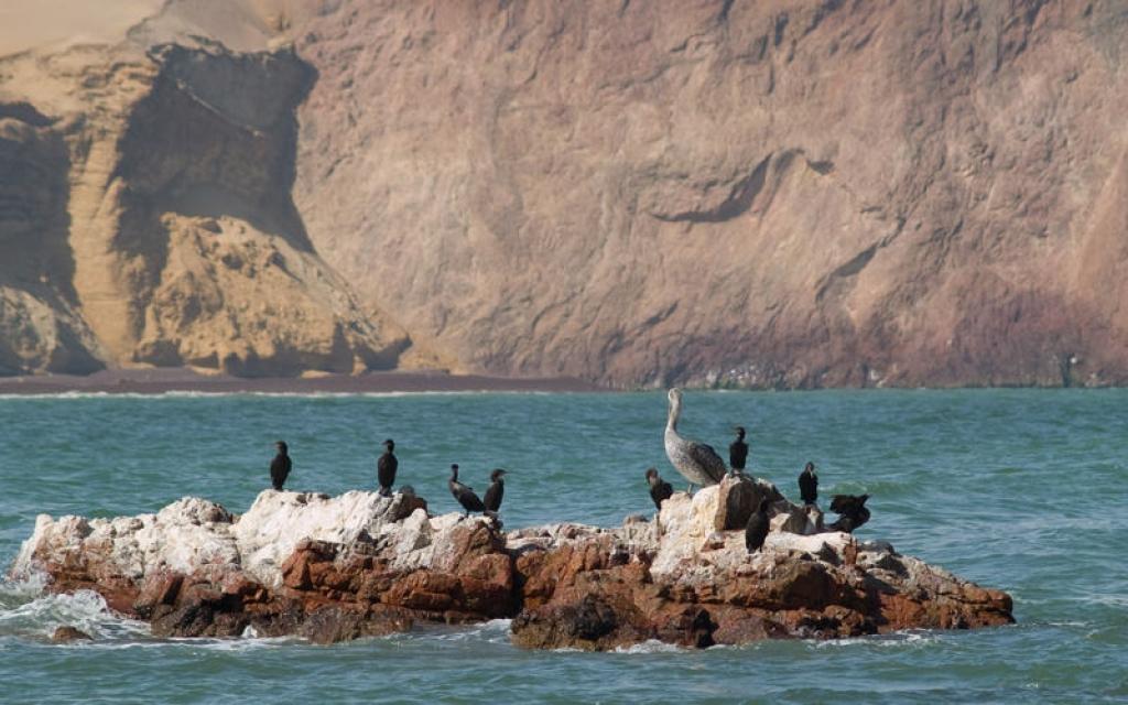 Les îles Ballestas et l'oasis d'Huacachina