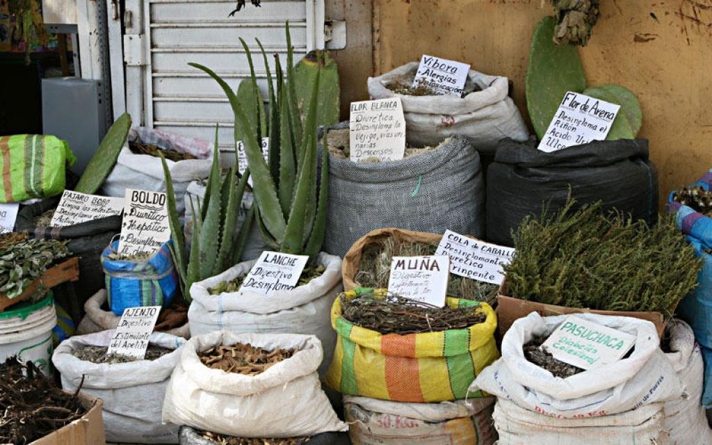 Plantes médicinales et caïmans
