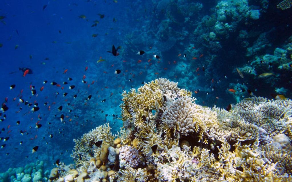 Exploration des fonds marins