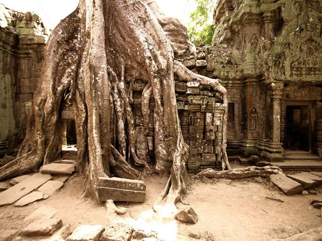 Angkor Wat : splendeur éternelle
