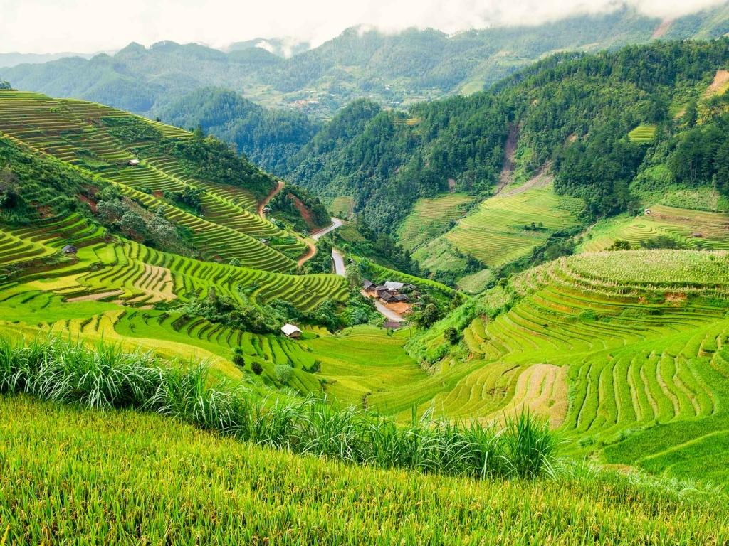 Les plus belles rizières en terrasse