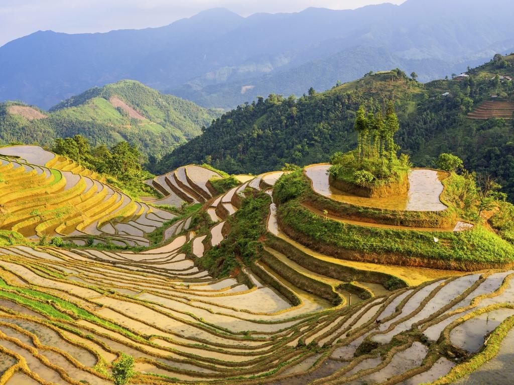 Randonnée dans les rizières