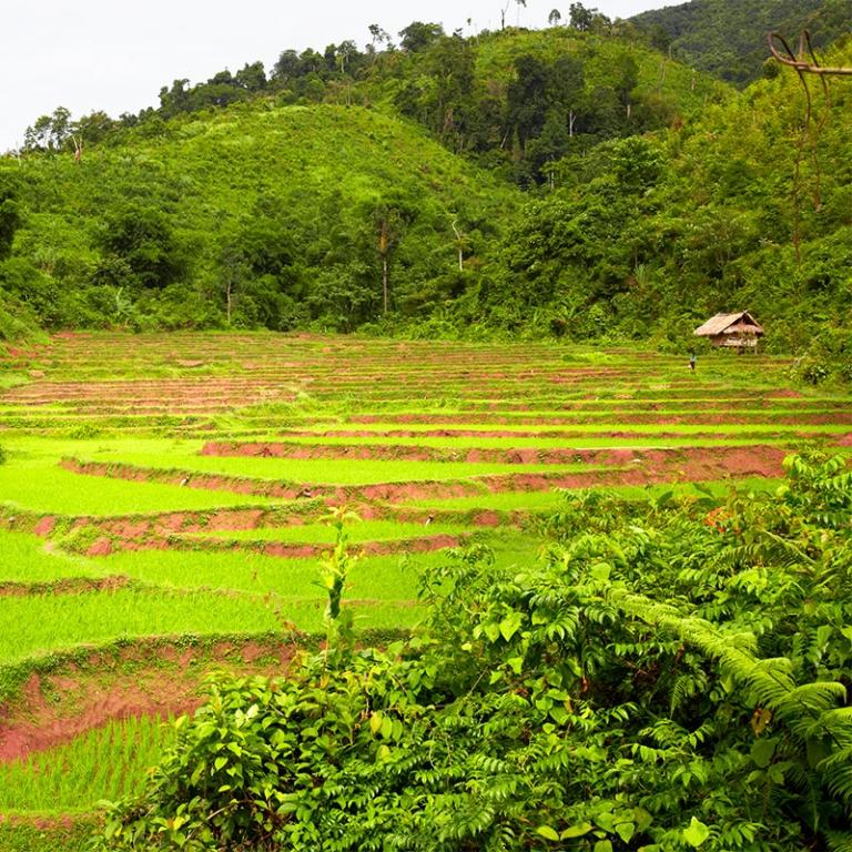 Randonnée à Luang Namtha