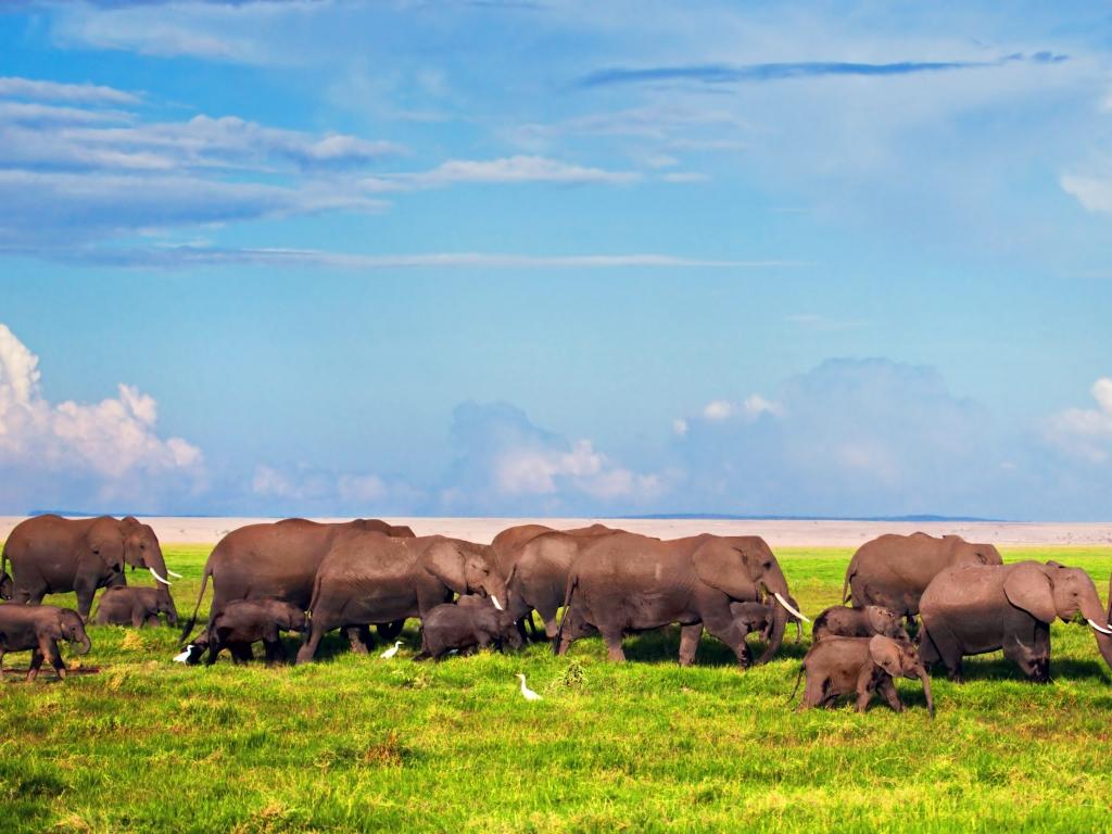 Première journée de safari dans la savane du Tsavo