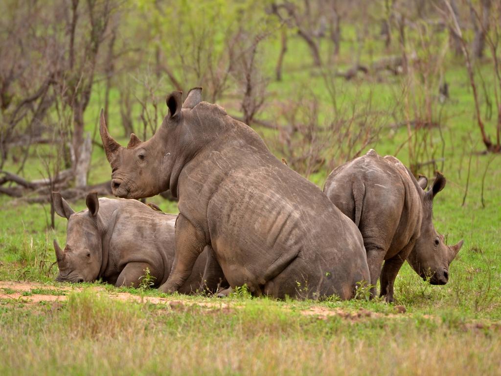 Les Big Five au Parc National Kruger