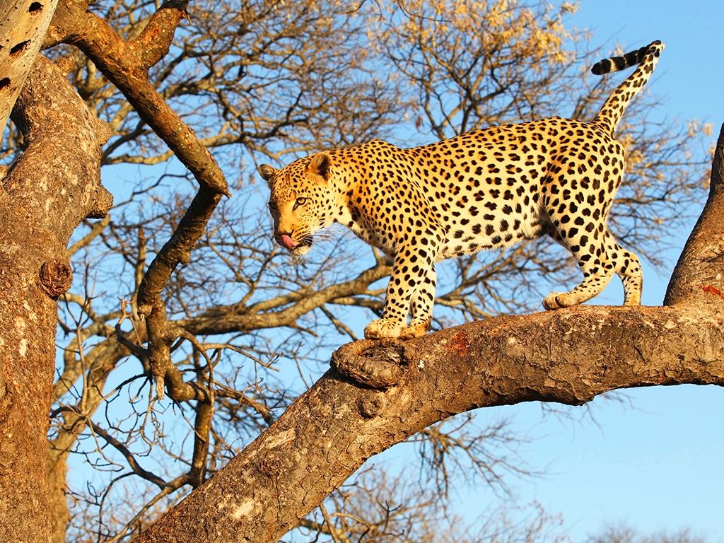 Découverte du mythique parc Serengeti