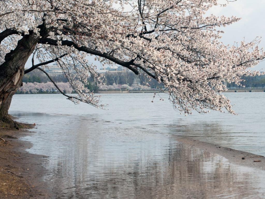 Visit the park and Lake Mashû-ko