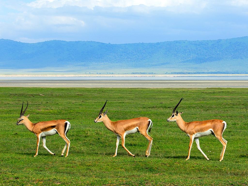 Immersion dans le merveilleux cratère Ngorongoro