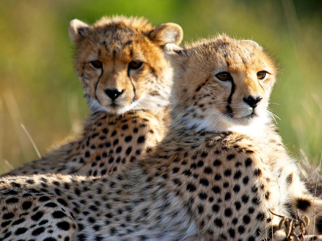 Safaris dans les montagnes