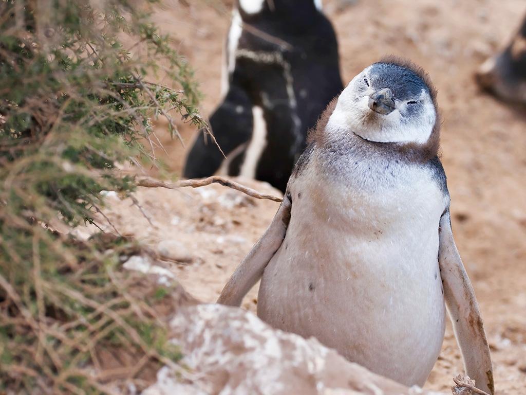 A Puerto Madryn, au bord de l'Atlantique
