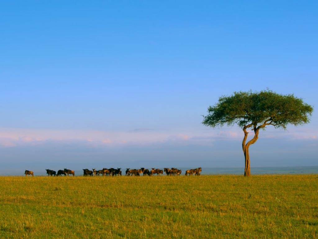 Safari dans le légendaire Masai Mara