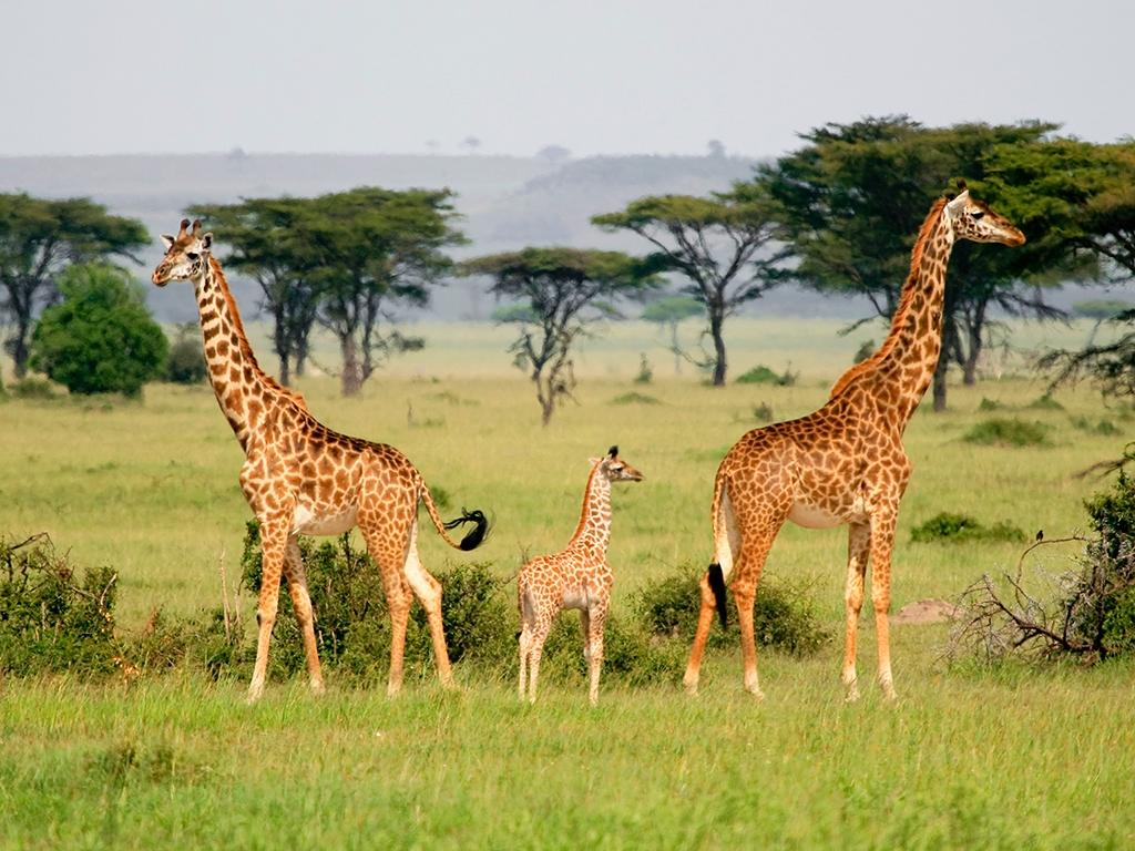 Au cœur de l'immensité du Serengeti