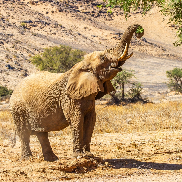 Safari dans le lit de la rivière Hoanib (110km)