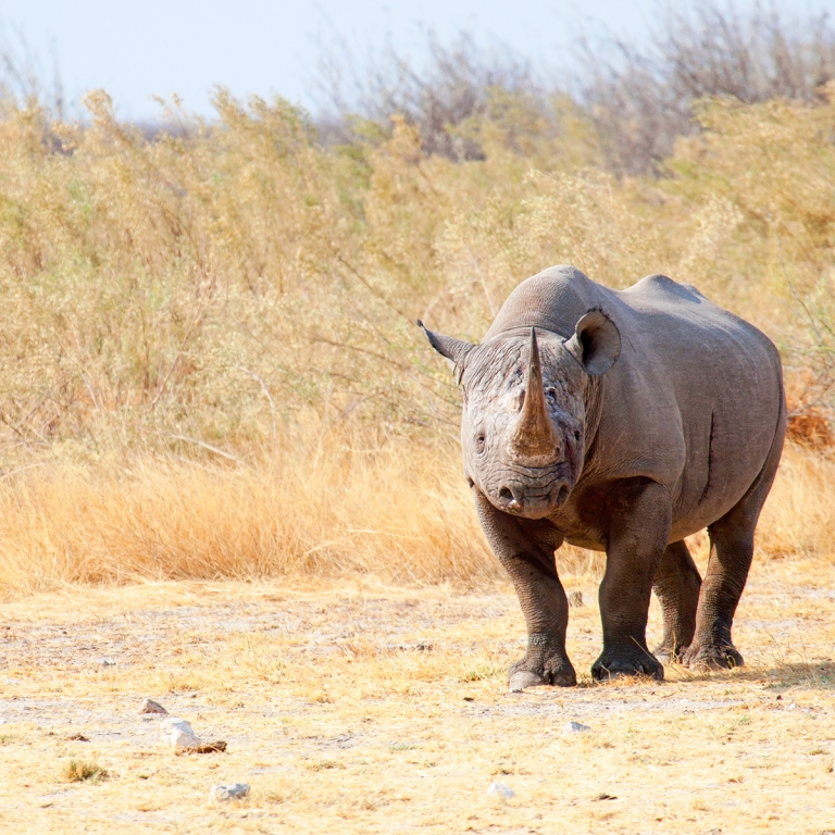 Safaris confidentiels à Ongava (180 km)