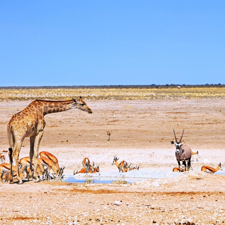 Journée entière de safari (70km)