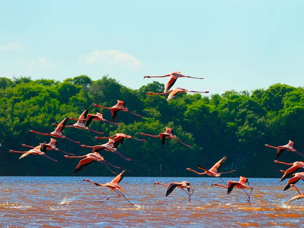 L'écrin naturel de Rio Lagartos