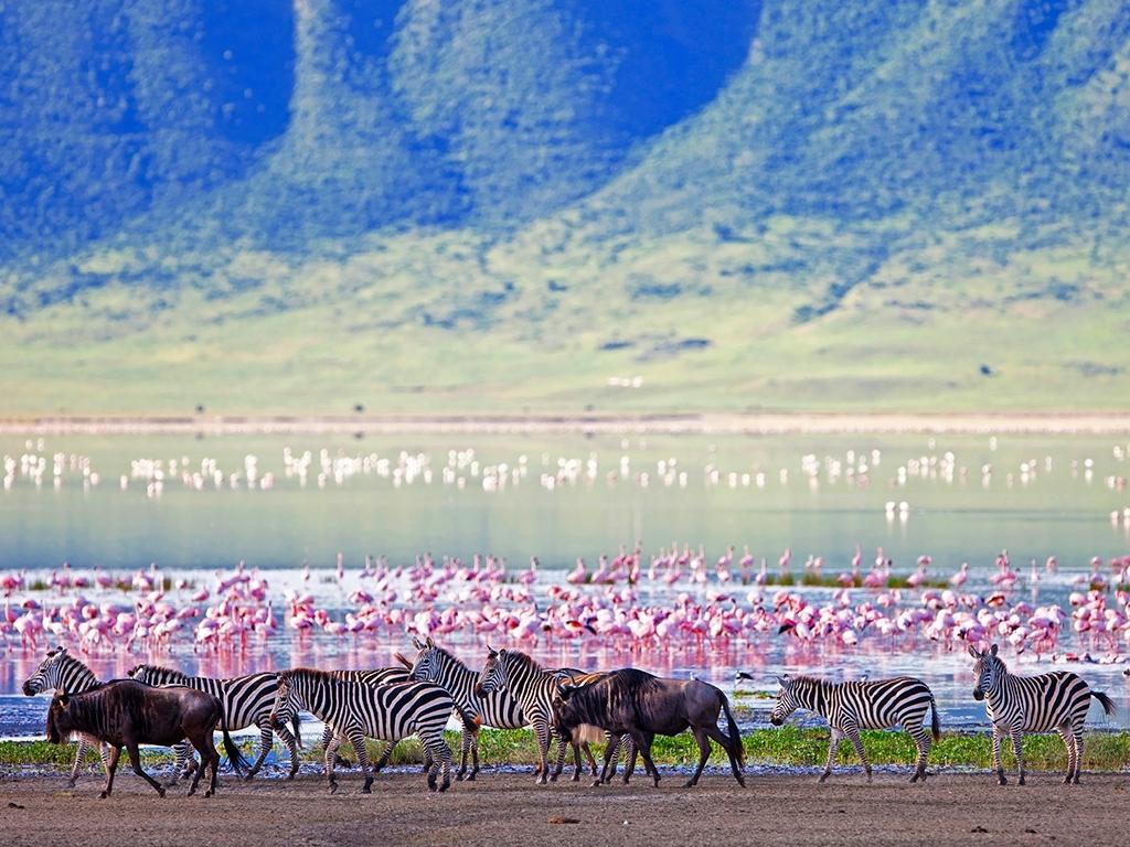 Safari en terre Masaï