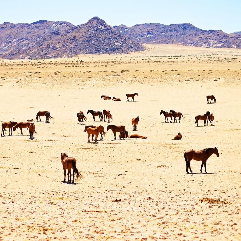 Le galop fascinant des chevaux sauvages (305 km)