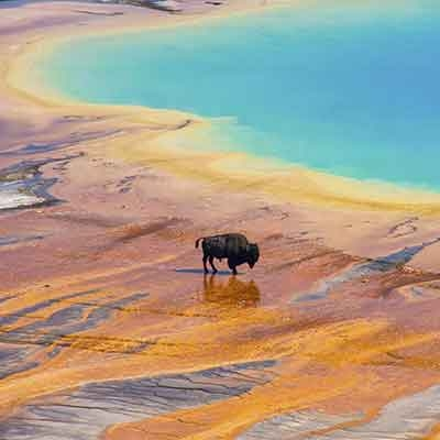 Thématique: Les paysages les plus oniriques / les plus beaux parcs et réserves