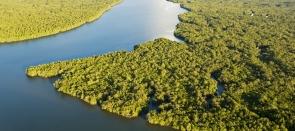 Terre d'épices et Or vert de Bornéo