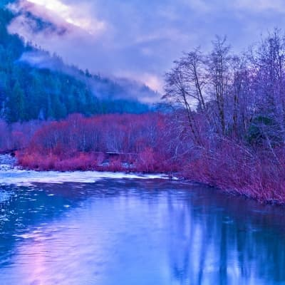 North Fork Quinault River Trail