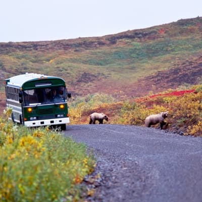 Tour de bus au Parc National de Denali