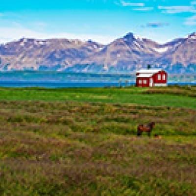Visite de la ferme d'Erpsstaðir