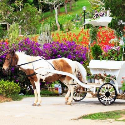 Balade en charrette à cheval