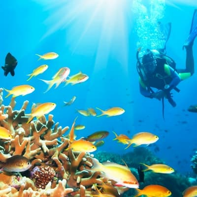 Plongée sous-marine au Panama