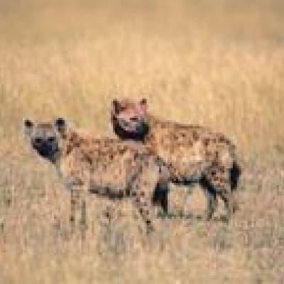 Les activités proposées par votre lodge au Liwonde national park