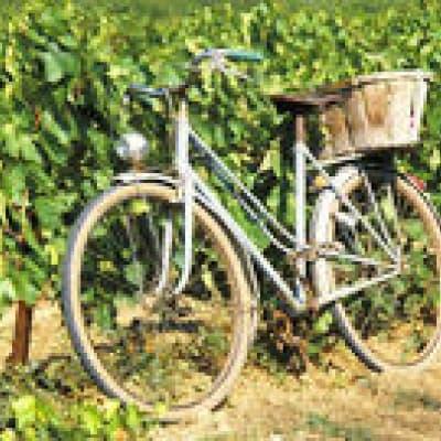 Tour en vélo dans les vignes