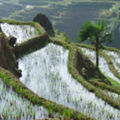Randonnée à Yuanyang