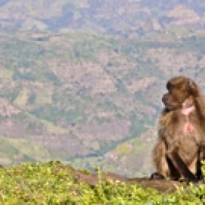 Randonnée dans le parc national de Simien