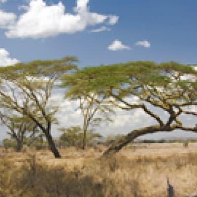 VTT à Manyara