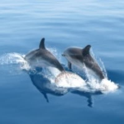 Observation des dauphins et otaries