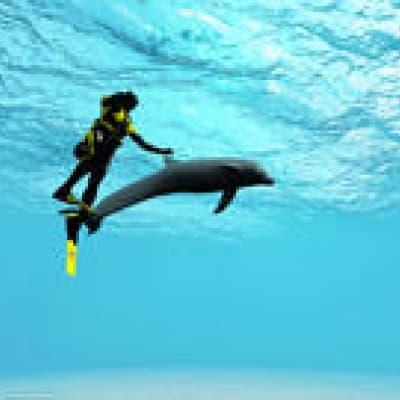 Nager avec les dauphins à Paradise Island !