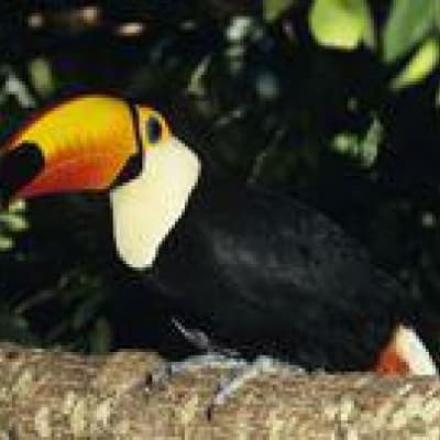 Activités dans le Pantanal