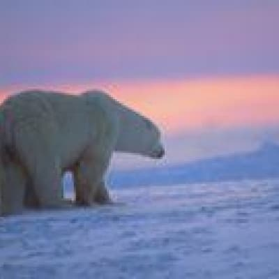 Découverte de la faune en Arctique