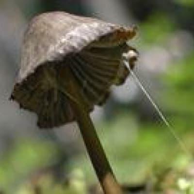 Mycologie - découverte de la nature