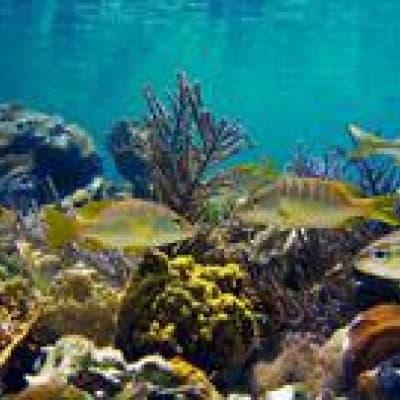 Plongée et découverte de la faune et de la flore au Parc National de Cahuita