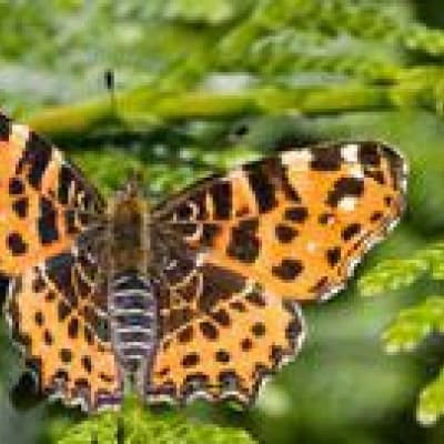 Visite  aux jardins de papillons et grenouilles
