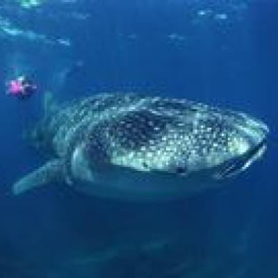 Observation des baleines à Katsurahama