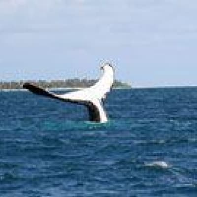 Expédition baleines