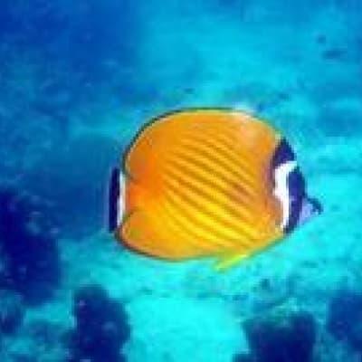 Exploration des fonds marins en plongée