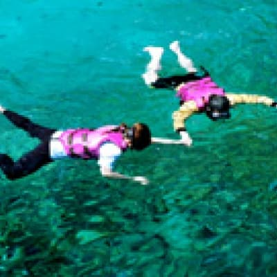 Snorkelling among the colourful fish