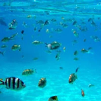 Aquablue exploration